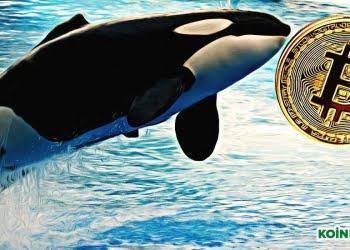 balina bitcoin