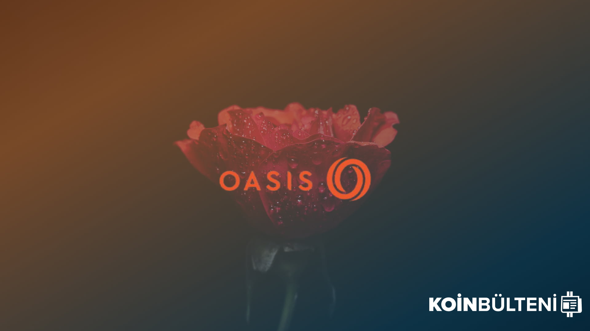 oasis-network