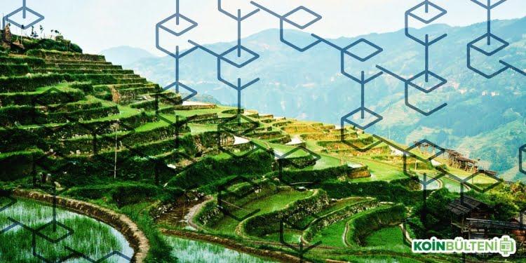 rice-field-blockchain