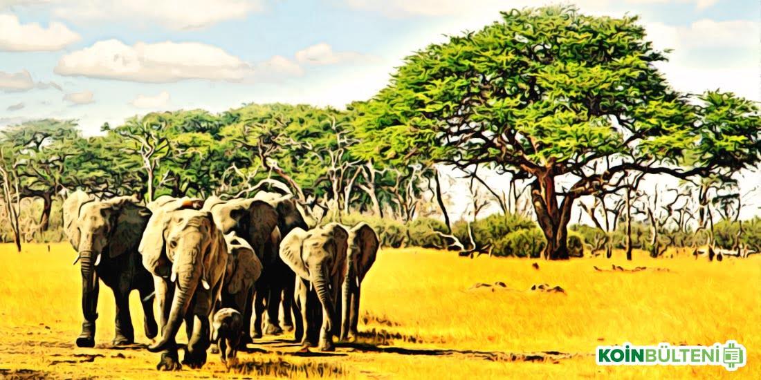 Zimbabve Afrika